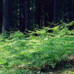 Kanta-Hämeen metsistä paras tili