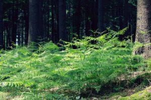 Metsä, lehto