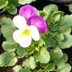 Iittalan puutarha on erikoisuuksien ihmemaa