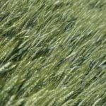 Luomutuotanto voimakkaassa kasvussa Hämeessä