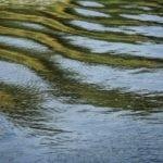 Kuolleet kalat ihmetyttivät Janakkalassa