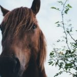 Forssassa aletaan kouluttaa hevosalalle tradenomeja